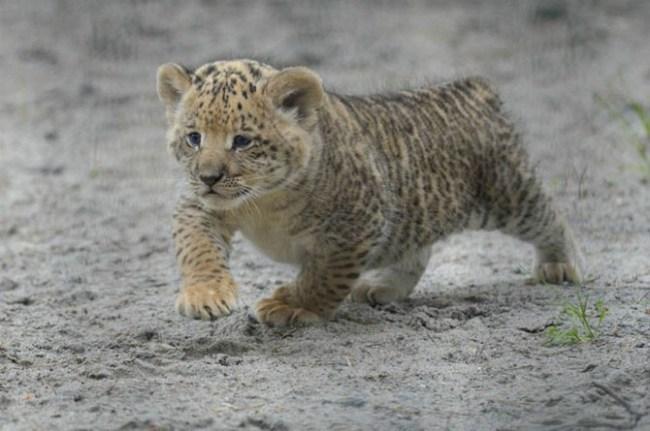 Фото животных (22 фото)