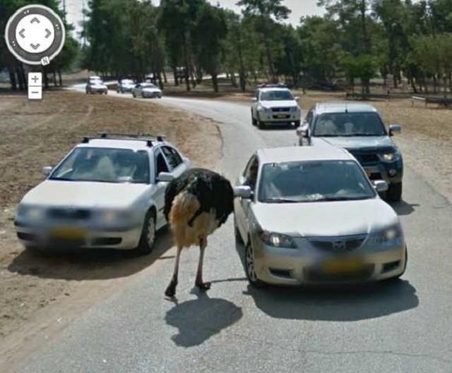 """Животные в кадре на сервисе """"Карты Google"""" (20 фото)"""