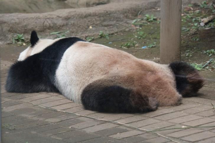 「パンダ 悲しい」の画像検索結果