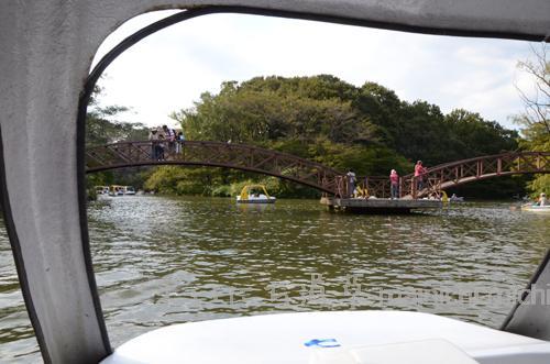 ペダル式ボートもあるよ