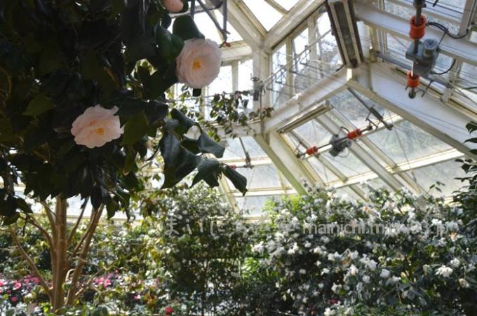 植物園・温室