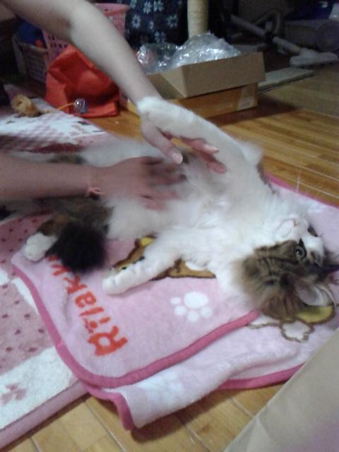 お腹のマッサージ中の猫