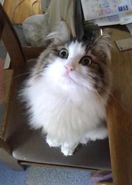 猫お 画像