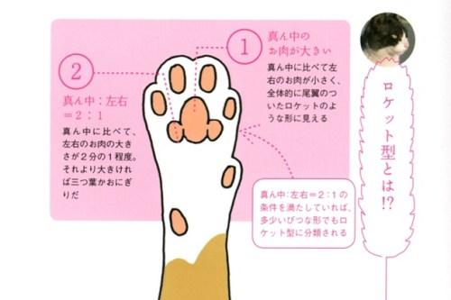 猫の肉球占い
