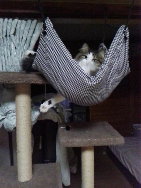 猫用ハンモックに入る猫