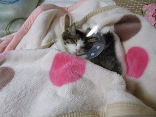 猫の避妊手術問題
