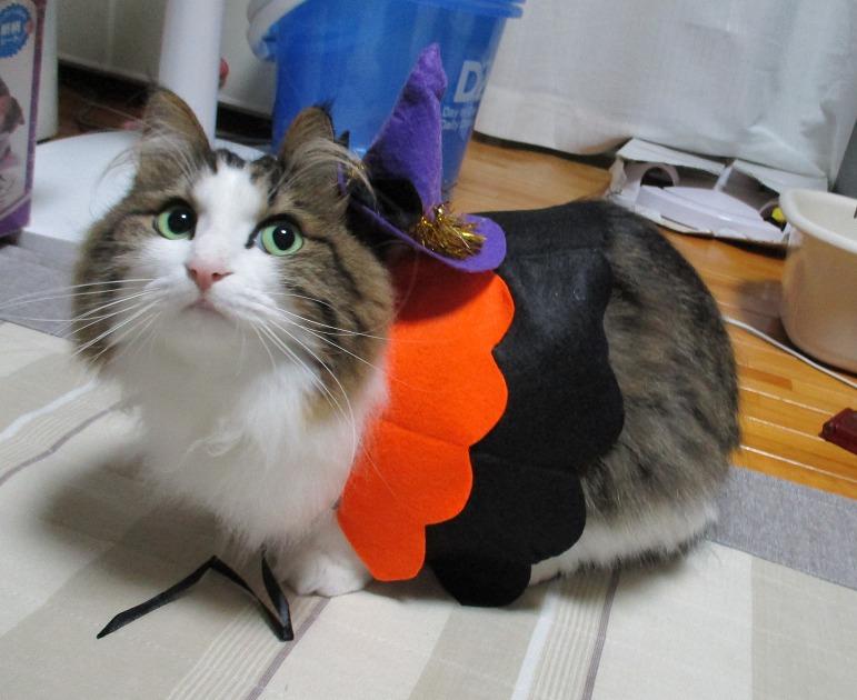 ハロウインのコスプレをする猫