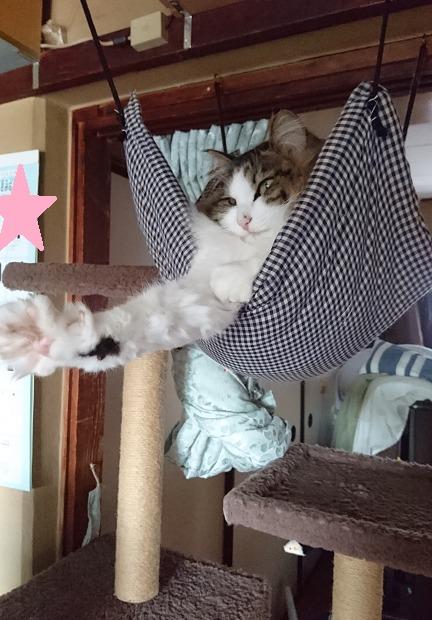 目覚ましの代わりになる猫