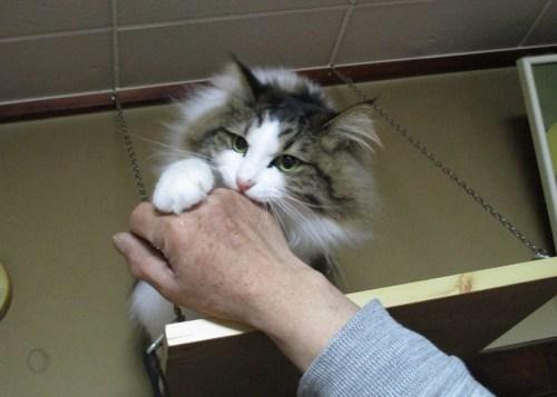 怒ってる猫の画像
