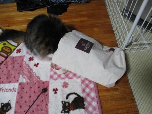 ゴディバの袋に入る猫
