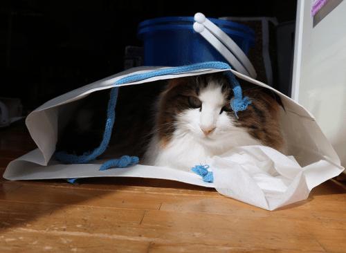 袋の中から見る猫