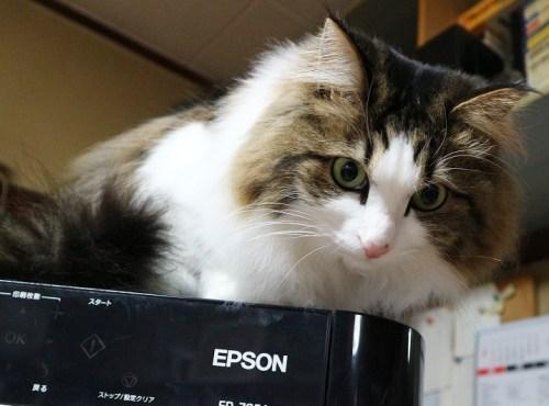 プリンターの上に乗る猫