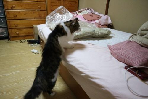 布団圧縮袋に穴をあける猫