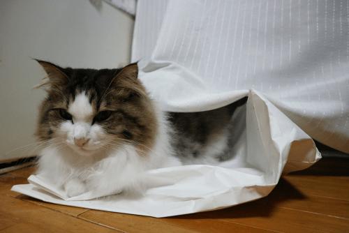 猫のよくわからない行動