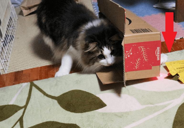 ニャンだろー光線で遊ぶ猫