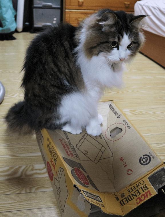 箱の上に乗る猫