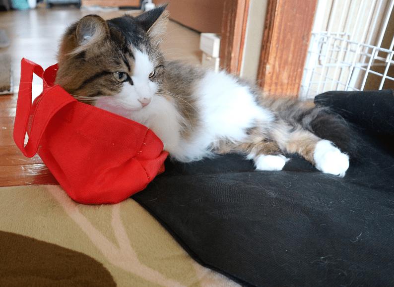 袋を被った猫