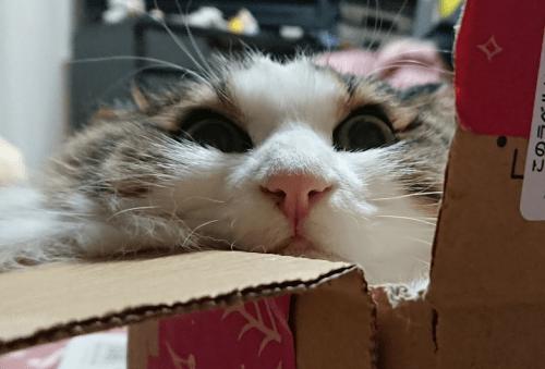 不細工な顔の猫