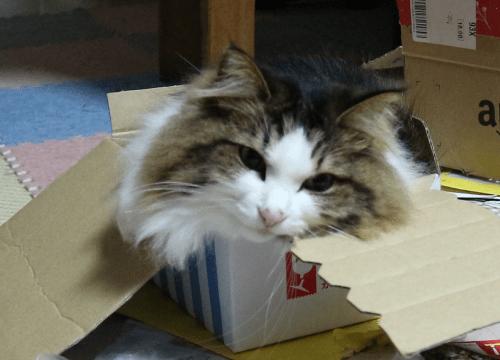 小さすぎる箱と猫
