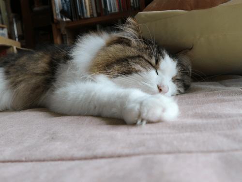 雨の日の猫は眠い