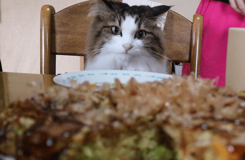 お好み焼きを狙う猫