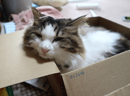 寝ぐせがつく猫