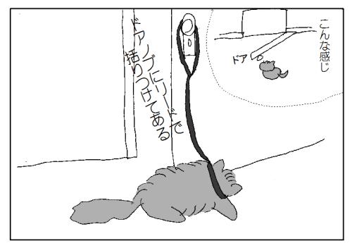 猫 散歩 リード
