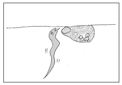 巣の形状 蛇に襲われやすい