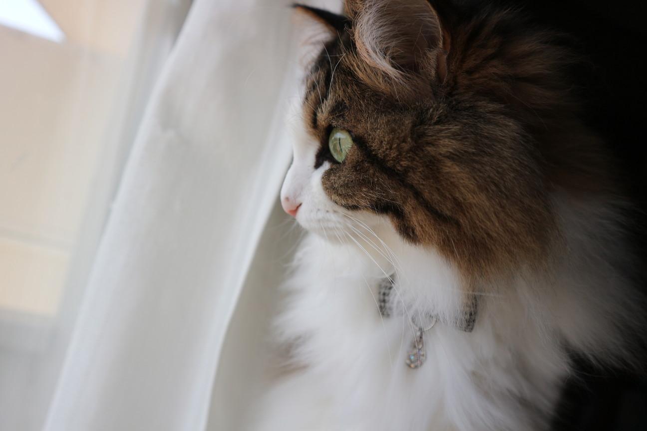 つばめを見る猫
