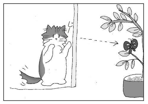 ナミアゲハ 羽化 産卵 柑橘の木