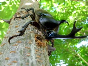 スーパー長寿!最も長生きする昆虫はどんな虫で何年生きる?生態を紹介!