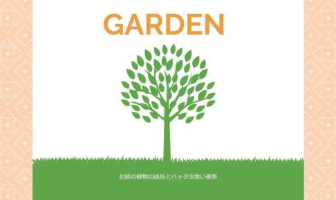 お庭の植物の成長とバッタ虫食い被害