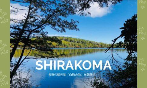 長野の観光地「白駒の池」を朝散歩!