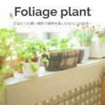 日当たりの悪い場所で植物を楽しむならこの方法!