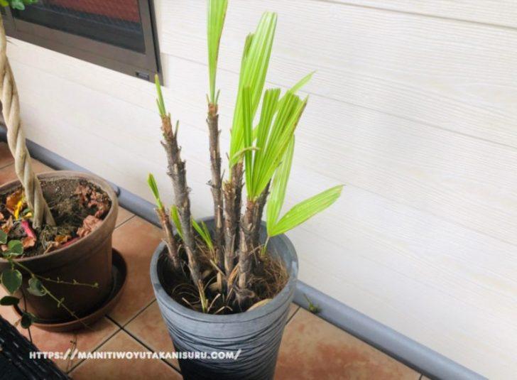 【入居後1年5ヵ月WEB内覧会】やっぱり暗くて植物が育ちにくかった玄関