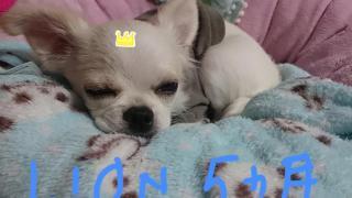 LION ❤5ヶ月♪(/ω\*)