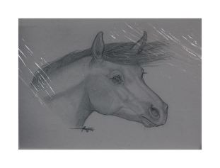 Handmade cards featuring horses and ponies by Erin Groff