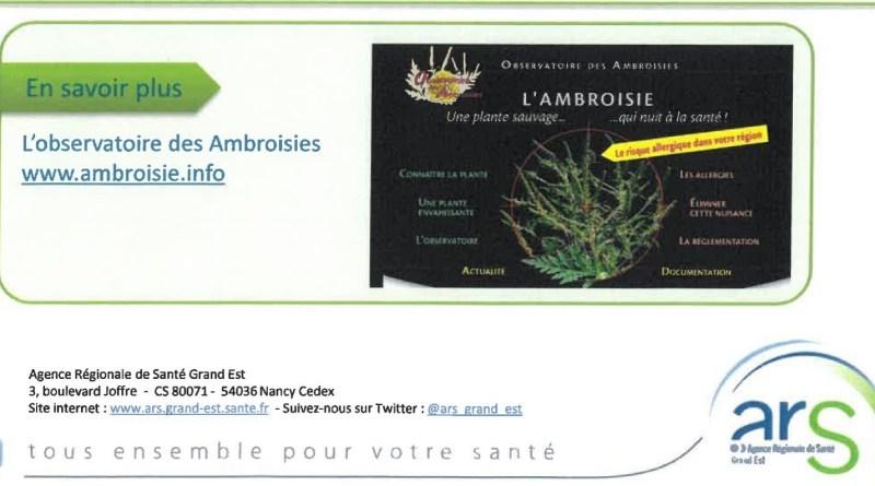 SIGNALEMENT DE  L'AMBROISIE