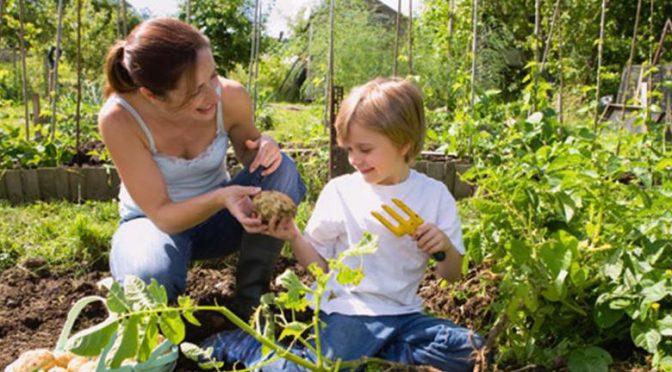 Produits phytosanitaires dans le jardin : nouvelle réglementation