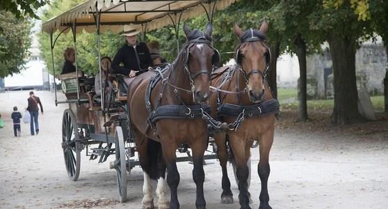 Balade commentée du Parc du Château en calèche 30.08.2019
