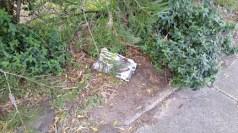 rubbish in garden