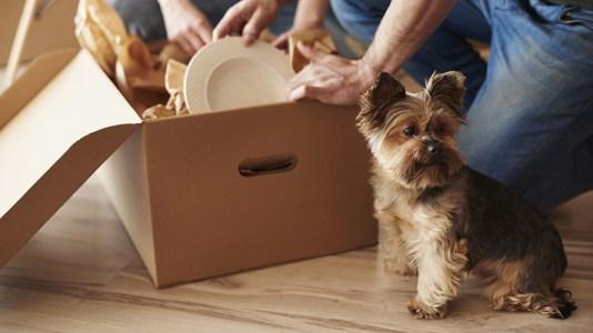 ¿Pensando en comprar vivienda? ¡No te olvides de tu mascota!