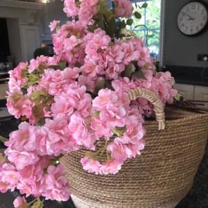 Pink Blossom Stems