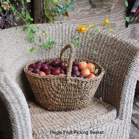 Hogla fruit picking basket ready for the harvest