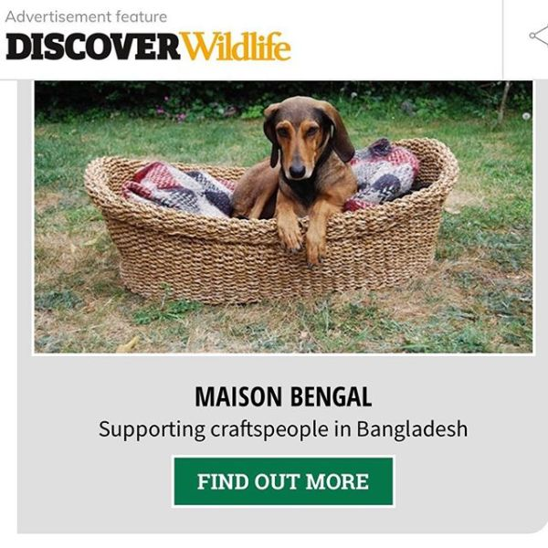 As featured in the BBC Wildlife's Ethical Xmas Gift Guide – dog NOT for sale