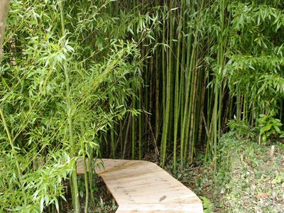 Passerelle cachée de la cabane des bambous
