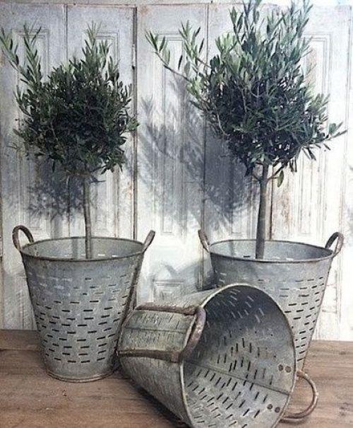 vintage-olive-bucket-tree