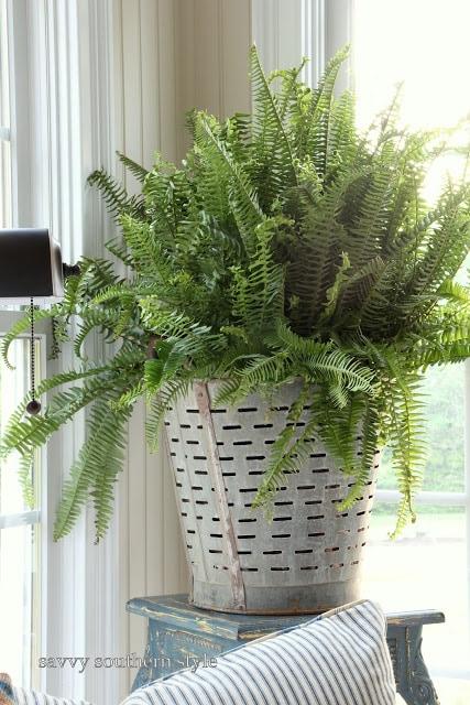 vintage-olive-basket-fern