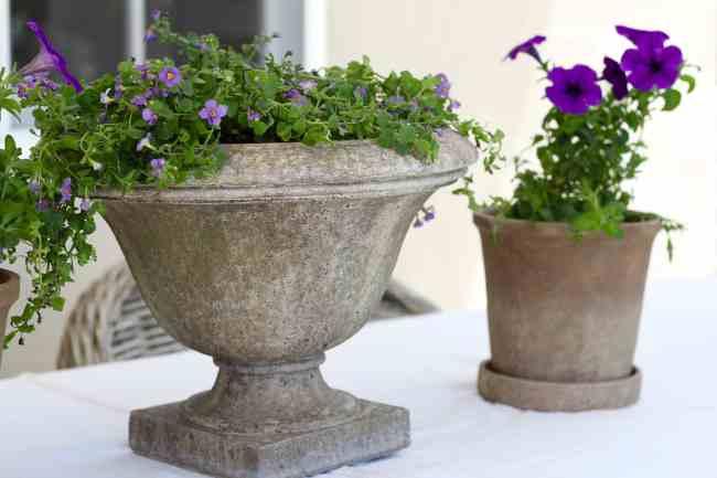 backyard-refresh-monrovia-plants
