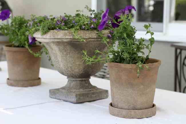 purple-flowers-distressed-pots-backyard-refresh